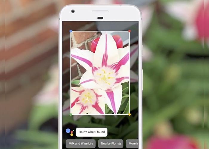 Google Lens identificando una planta