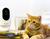 Con la cámara Pawbo+ de Acer podrás hacer videoconferencia con tu mascota