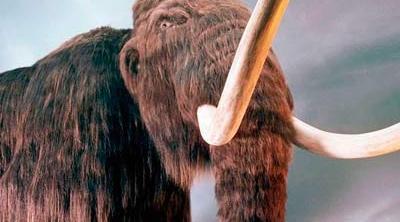 Encuentran restos intactos de mamuts de hace 10.000 años en Los Ángeles