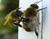 Un drone capaz de polinizar las flores cual abeja