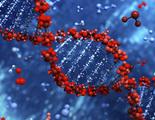 Científicos crean bio ordenadores a partir de células de riñón