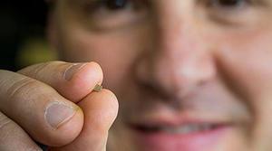 Un ingeniero de Microsoft consigue hacer funcionar inteligencia artificial en una Raspberry Pi de 35 dólares
