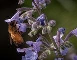 Google será capaz de dar avisos en días de alta concentración de polen