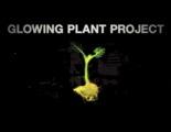 Iluminar las calles con plantas alteradas genéticamente